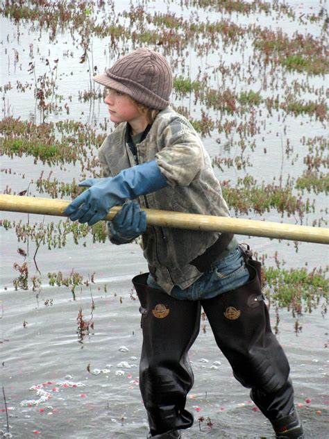 CAMP HOMESCHOOL: My 14th Annual Cranberry Harvest