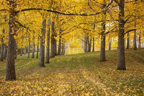Ginkgo Grove Tours - Winchester-Frederick County