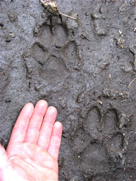 Wolf Hunting Information, Alaska Department of Fish and Game